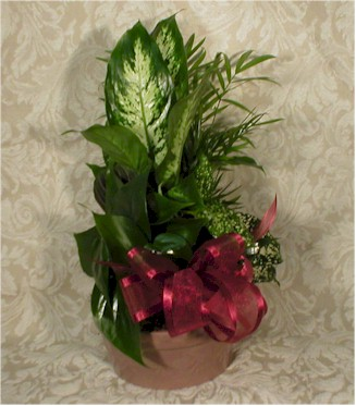 Piedmont flowers gifts products dish gardens small medium or large ceramic container or basket of mixed tropical green house plants small 2295 2595 medium 2895 3995 mightylinksfo